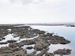 中油觀塘工程 不破壞保育珊瑚