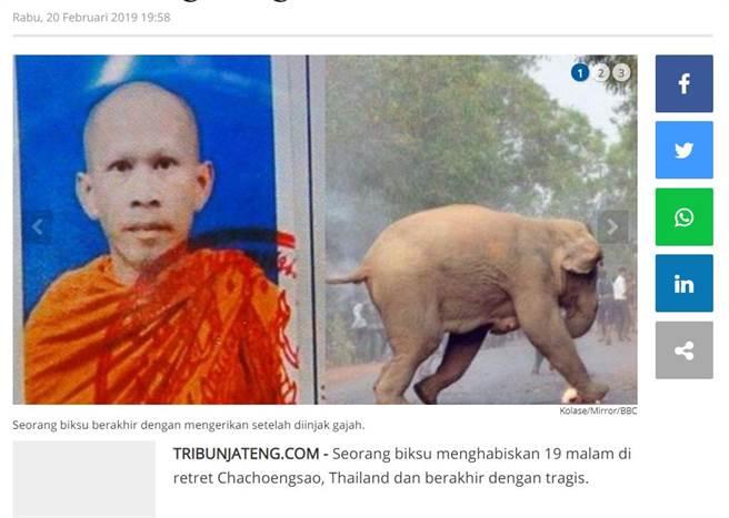 慘遭大象踩死的泰國僧人張飯河 (圖/翻攝自TribunJateng)