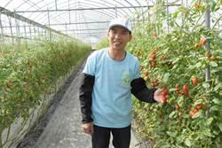 從外銷美術燈改行 他務農3年栽出第一名番茄!