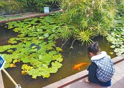 客家文化園區 景觀池遭亂餵