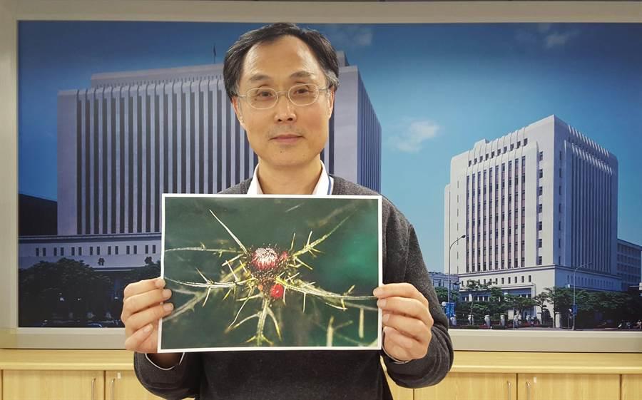 中央銀行發行局局長施遵驊展示千元鈔上「塔塔加薊」圖案的原始設計圖檔。(照:呂清郎攝)