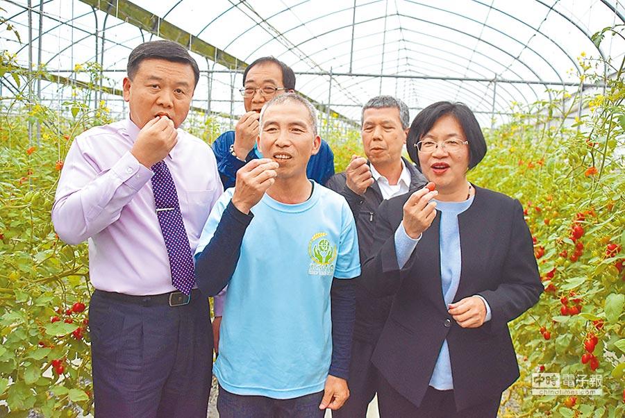 果農陳登葟(中)栽植小番茄摘下評鑑冠軍,彰化縣長王惠美(右)等前往參訪、觀摩。(吳敏菁攝)