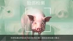 小心不要被掃到 陸開發「豬臉識別」技術防治豬瘟