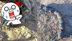 阿根廷驚現異形?田裡竄出人齒巨魚 一張嘴嚇壞人