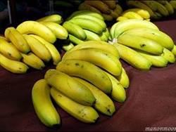 青蕉價格遭盤商壟斷? 農委會:公平會、地檢署偵查中