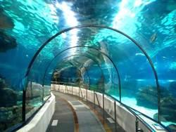 海底隧道如何修建 偉大工程令人讚嘆!