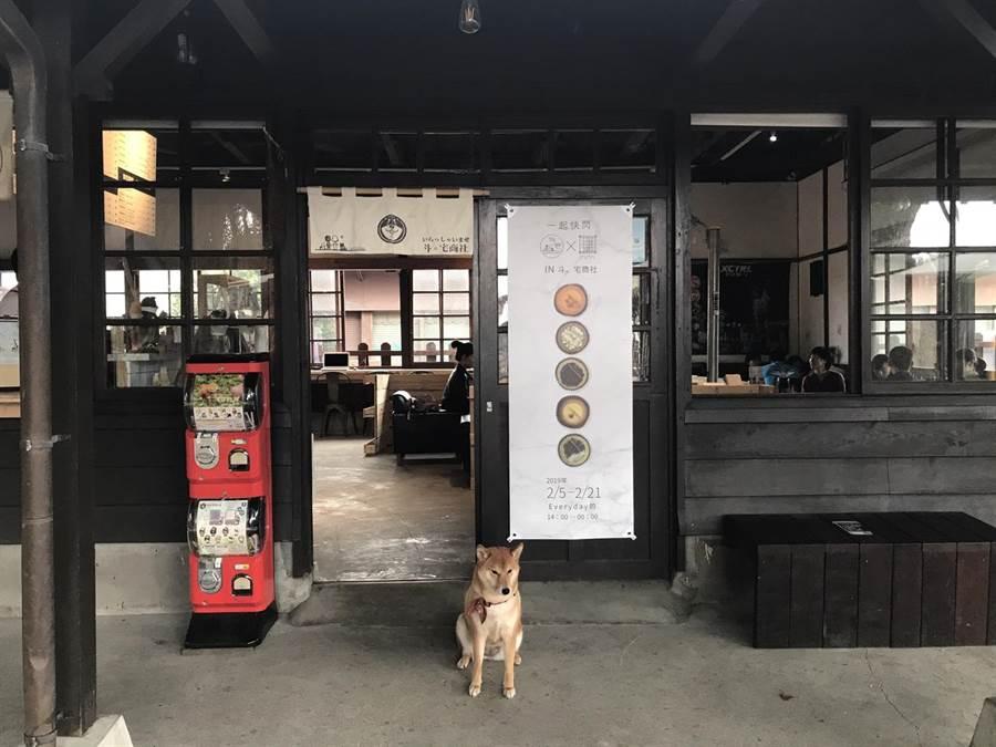 「斗。宅商社」的狗店長之一喜妹,是林得文創作的「麻豆」之一。(張祈攝)