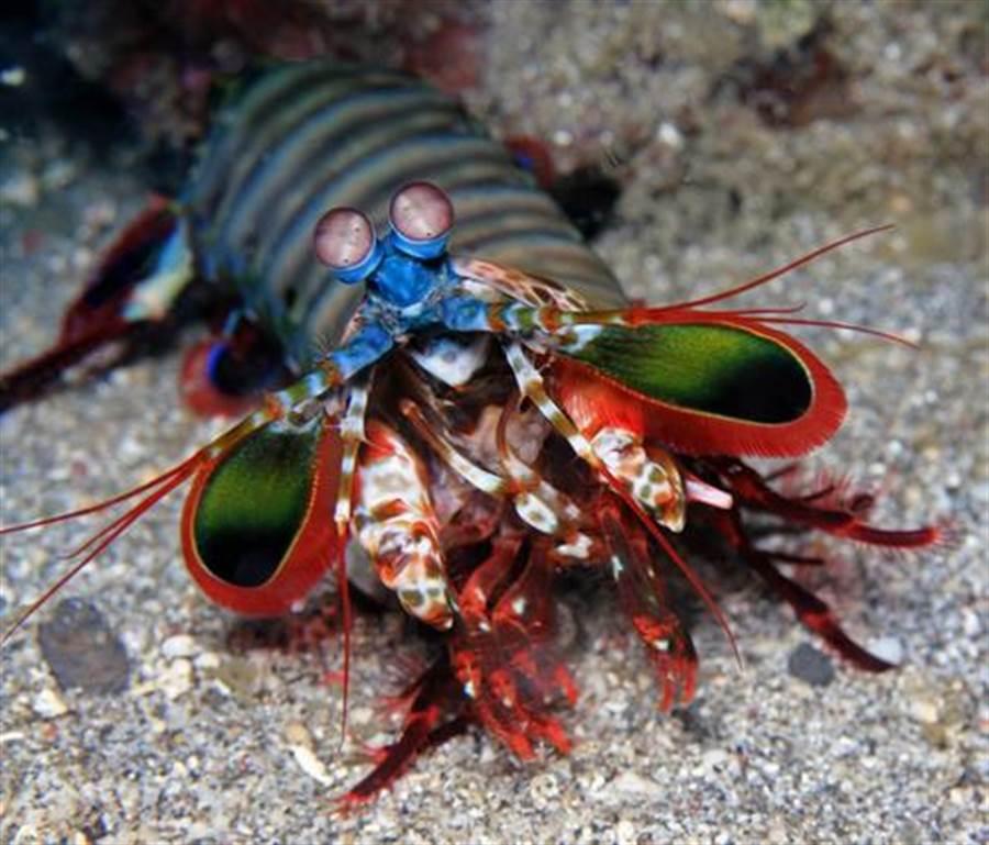 海邊釣到奇怪龍蝦 帶回家養超悲劇!(圖片取自/達志影像)