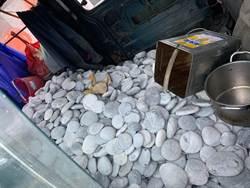 溪邊撿1.1噸鵝卵石鋪地板 花蓮鄉民GG了
