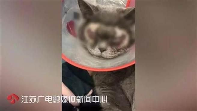 花大錢給喵星人割雙眼皮,網友炸鍋:考慮過貓感受嗎?(翻攝自《江蘇新聞》)