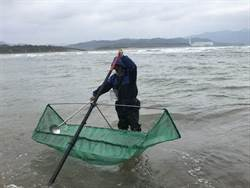 鰻苗捕撈漁期結束 明起至10月底禁捕
