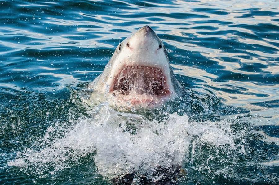 水族館裡看得到鯊魚 為何就是沒有大白鯊?(示意圖/達志影像)