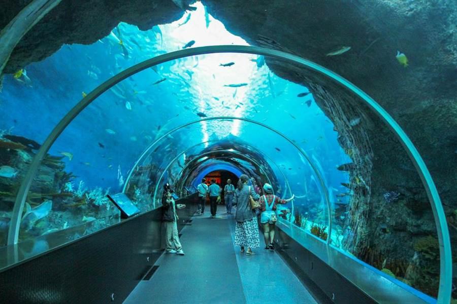 水族館裡能看見各種海洋生物,是不少人參觀的地點(示意圖/達志影像)