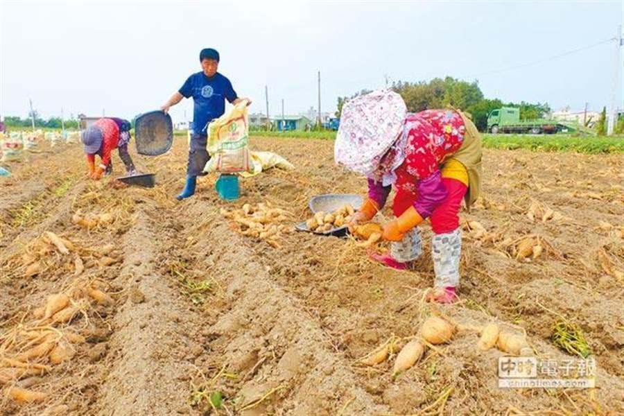 立委提議將老農津貼調高至8000元。(資料照)