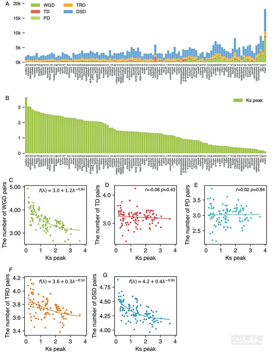 植物界不同類型重複基因含量分布及其隨時間變化規律。(取自南京農業大學園藝學院官網)
