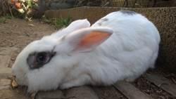 捨不得兔寶寶  男大生放棄輕生念頭
