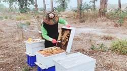 蜜蜂Long stay   農會養蜂助農作授粉