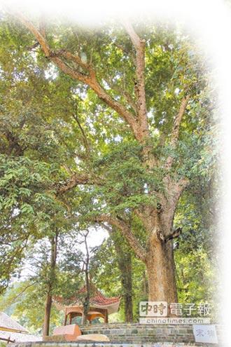 江西藏祕寶 打造金絲楠木旅遊線