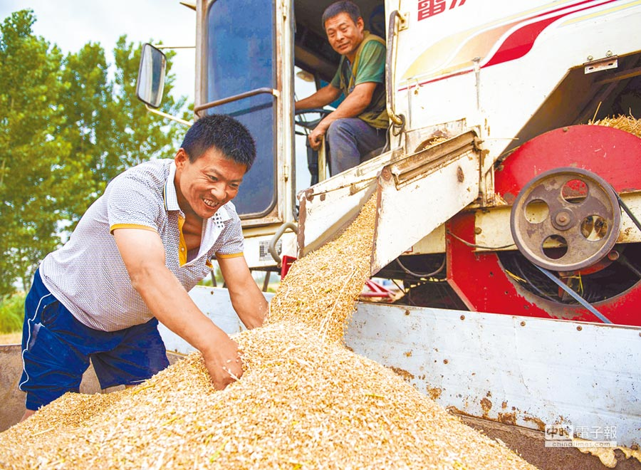 2018年6月8日,河北省衡水市棗強縣的小麥豐收。(新華社)