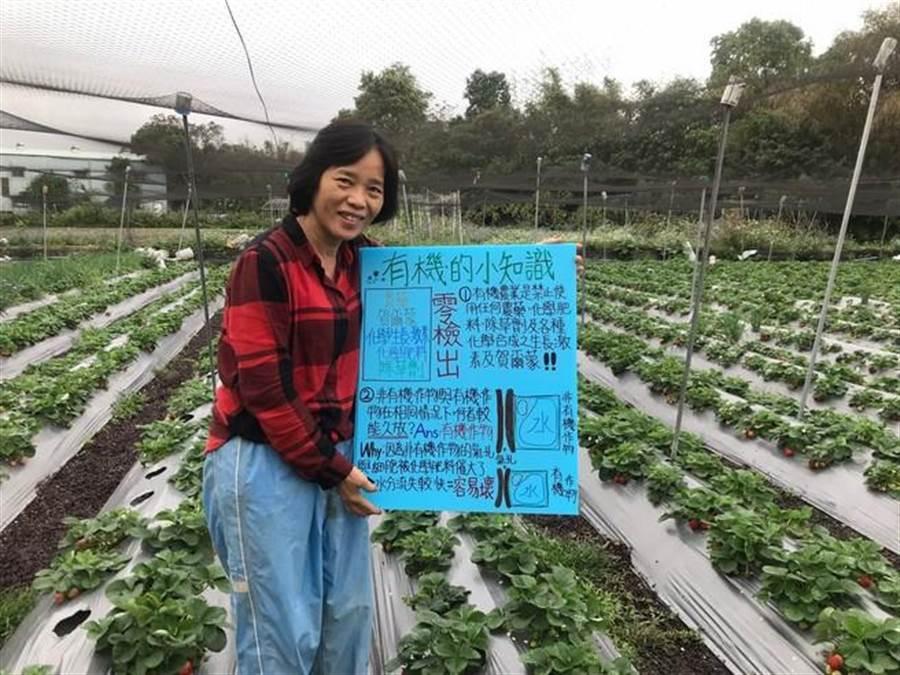 草莓小知識及有機小知識講解看版。(新北市農業局提供)