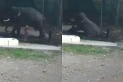 影》大象洗澡屁股坐地 將他壓成粉身碎骨亡