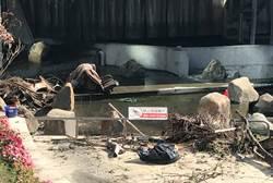 綠柳川雜亂不堪市議員抨擊 市府強調已啟動SOP加速清理