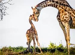 動物園超難問答「這是什麼」 網知真相超震驚!