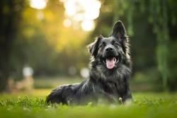 為何狗只對某些人吠? 這3原因告訴你