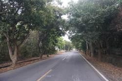 發展新化觀光  市府投入1500萬元改造南168線道