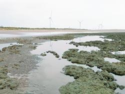 搶救大潭藻礁 環團籲停止觀塘施工