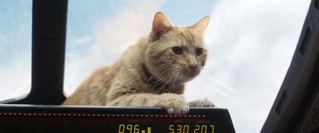 電影裡的呆頭鵝貓咪是最討喜的角色。(迪士尼提供)