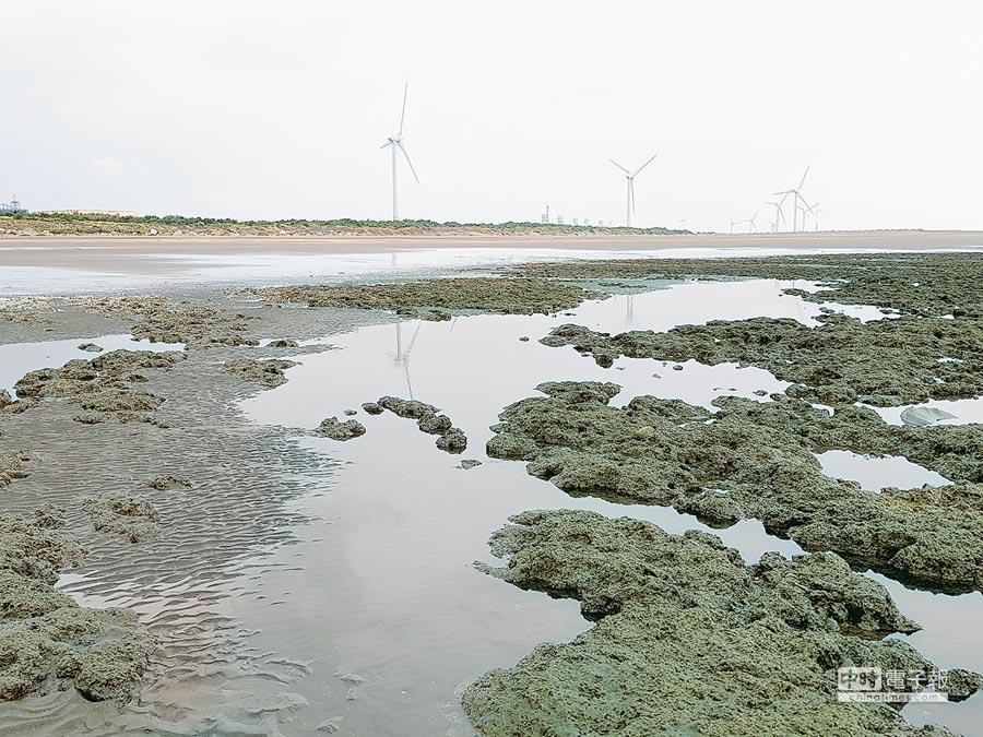 桃園觀塘港的藻礁。(中油提供)