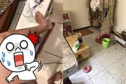 屋藏千萬跳蚤 清潔員被咬腿腫崩潰逃