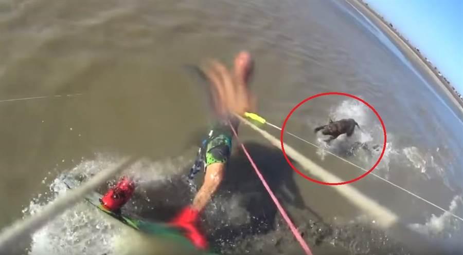 衝浪衝到一半遭攻擊 比特犬突「涉水暴衝」咬人(圖翻攝自/youtube/El Fundador Online)