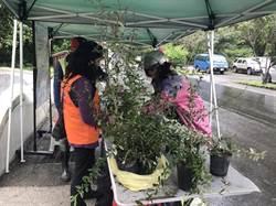 花蓮植樹贈苗活動開跑 預計送出一萬株樹苗