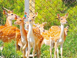 鹿境循跡 邀你一探梅花鹿世界