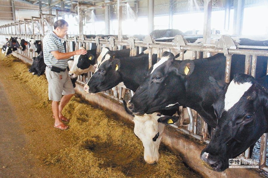 農委會將開放酪農外勞,圖為雲林縣崙背鄉酪農戶。(周麗蘭攝)