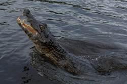 想重現「水上行走」神蹟 牧師下秒慘變鱷魚大餐