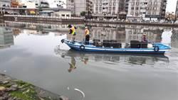 運河撈出2噸魚屍  疑遭倒廢水  環保局:春雨改變水中溶氧量所致