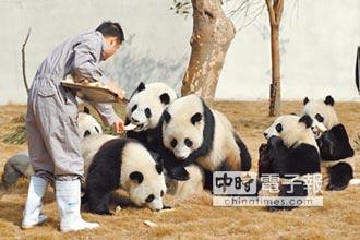當韓國瑜訪陸伴手禮!台籍人大代表建議 送高雄大貓熊!