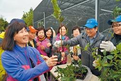 新豐植樹減碳 千棵苗木免費送