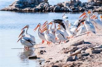 7億海鳥駐足「大號」 這小島遺臭數百年!