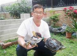 難忘兒時大雨流失的小龜!一生癡迷養龜收集上萬藏品