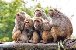 蘇揆回禮送台灣獼猴