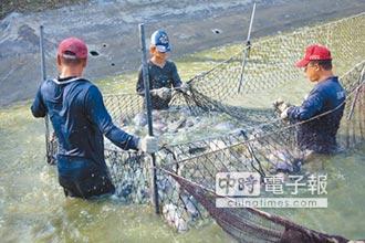 口湖台灣鯛、台西文蛤 地方創生起跑