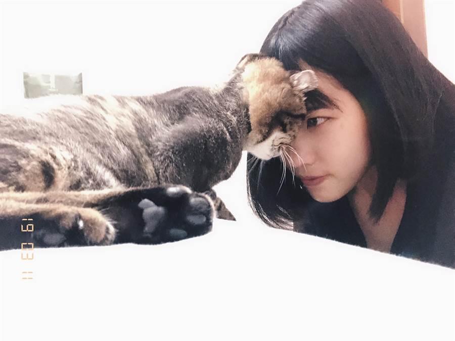 張家瑜飼養美短捲耳貓「Q欸」,建立9年「革命情誼」。(張家瑜提供)