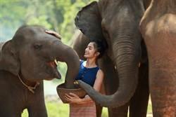 大象眼中人類很可愛?研究:像我們看到小狗
