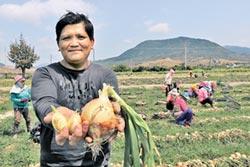 暖冬農損補助太少 農民無感