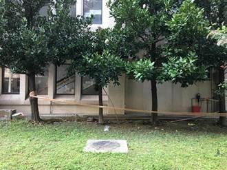 台科大研究生疑女廁窺春光 被逮急跳窗摔重傷