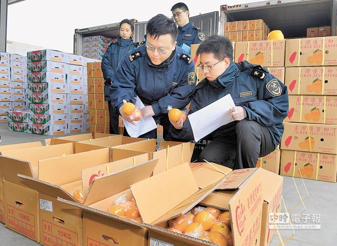 1月20日,滿載700多噸台灣水果的貨輪「台北快輪」抵達福建平潭港。(新華社)